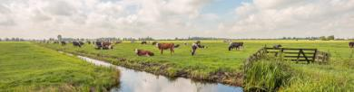 Camping Zuid-Holland